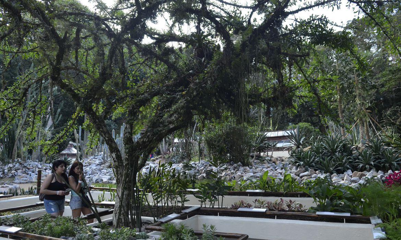 jardim-botanico-do-rio-inaugura-servico-de-visita-guiada-em-carrinho