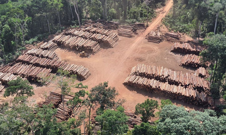 pf-apreende-43,7-mil-toras-de-madeira-ilegal-no-para