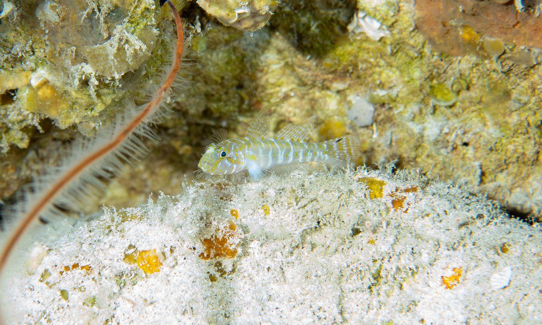 cientistas-descobrem-4-novas-especies-de-peixes-em-fernando-de-noronha