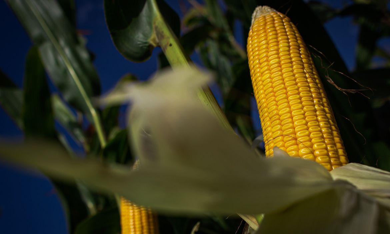 producao-agropecuaria-de-2020-alcanca-r$-871-bilhoes