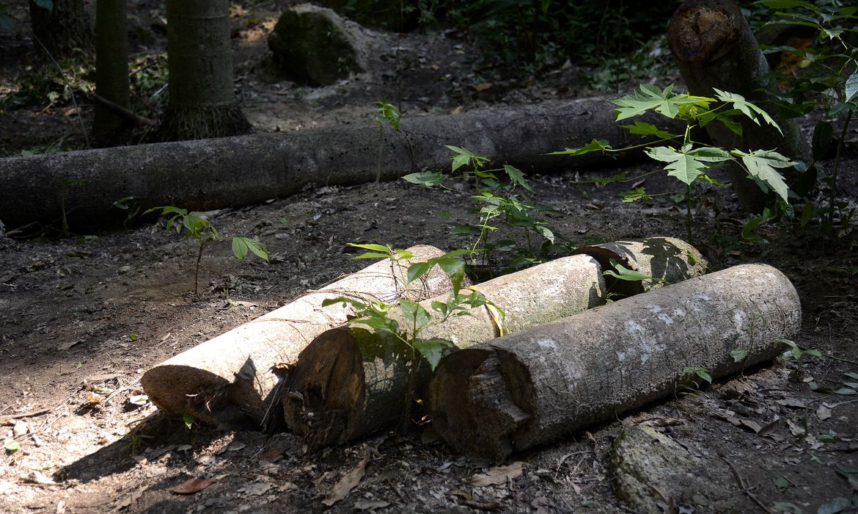 perda-de-florestas-mais-velhas-reduz-diversidade-da-mata-atlantica