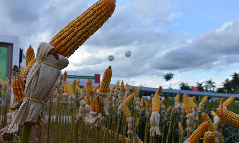 programa-credito-rural-financia-agropecuaria-com-r$-1,7-bilhao-em-2020