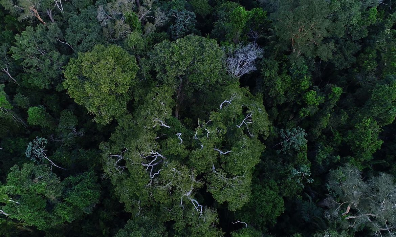 desmatamento-na-amazonia-tem-queda-de-70%-em-janeiro,-diz-governo