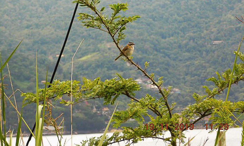 mais-de-25-mil-especies-da-flora-so-existem-no-brasil,-mostra-estudo