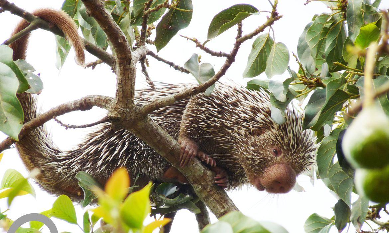 ceara-lanca-lista-inedita-de-animais-encontrados-no-estado