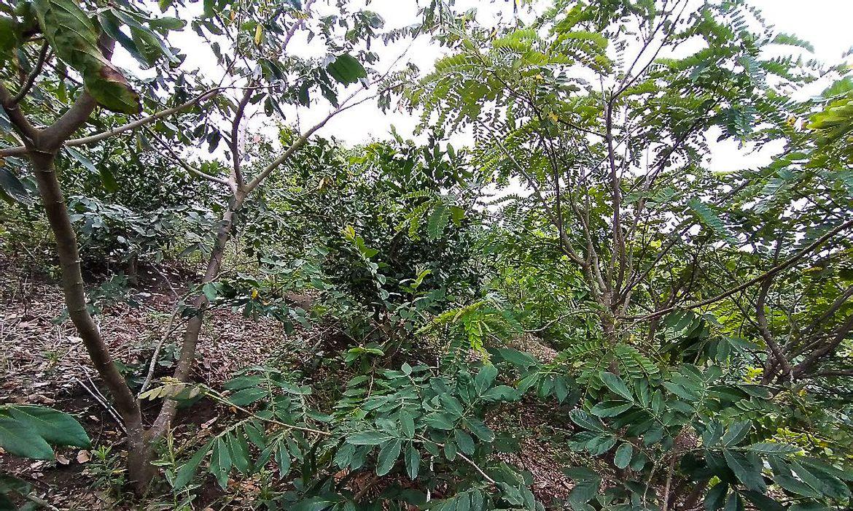 projeto-refloresta-propriedades-rurais-em-area-de-mata-atlantica