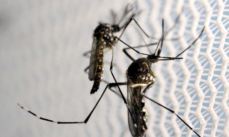 """acordo-preve-""""fabrica-de-mosquito""""-para-combate-a-dengue-em-brumadinho"""