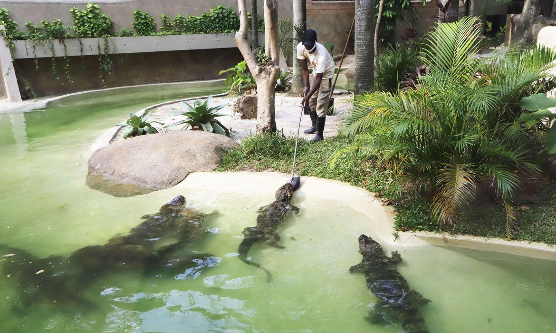bioparque-do-rio,-antigo-jardim-zoologico,-e-inaugurado