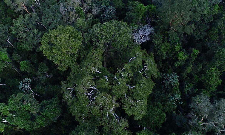 governo-autoriza-apoio-da-forca-nacional-ao-icmbio-na-amazonia
