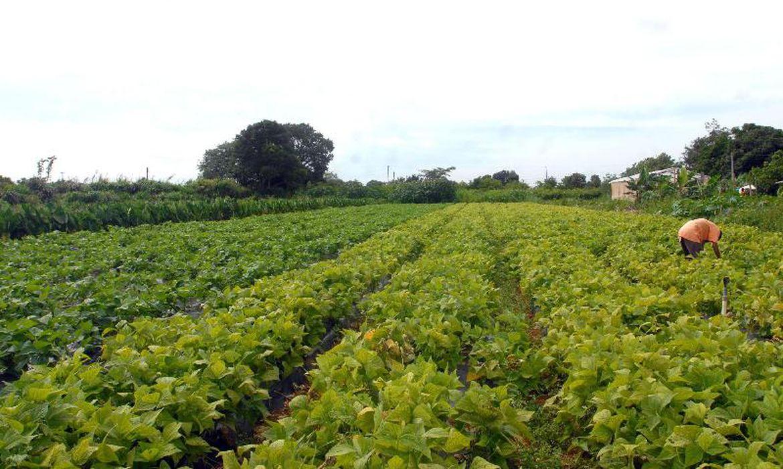 ministerio-paga-garantia-safra-a-25-mil-agricultores-familiares