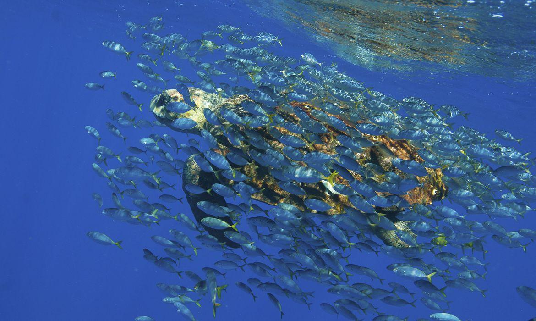 eventos-marcam-lancamento-da-decada-da-ciencia-oceanica-no-brasil