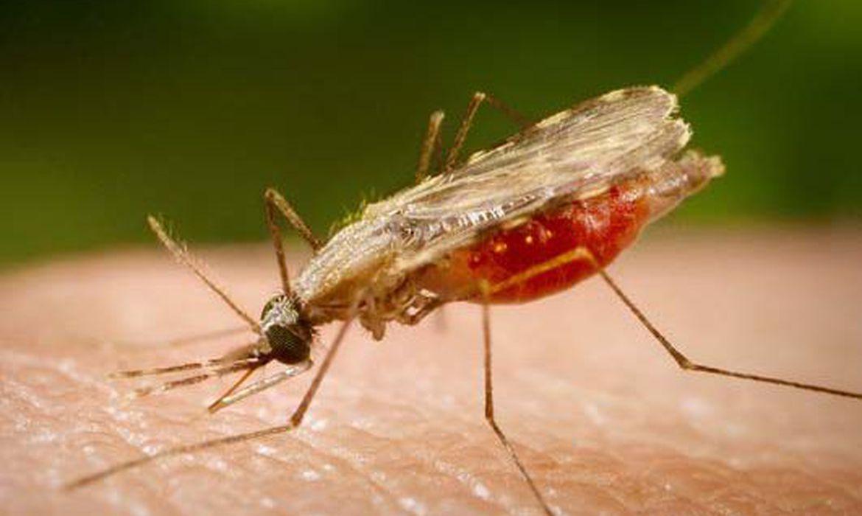 malaria:-casos-no-brasil-estao-em-queda,-afirma-infectologista