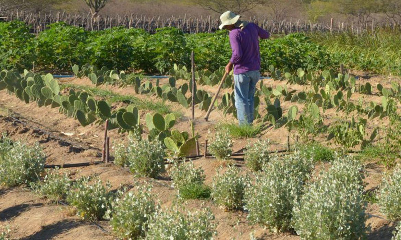 embrapa-cria-produto-capaz-de-aumentar-resistencia-vegetal-a-seca