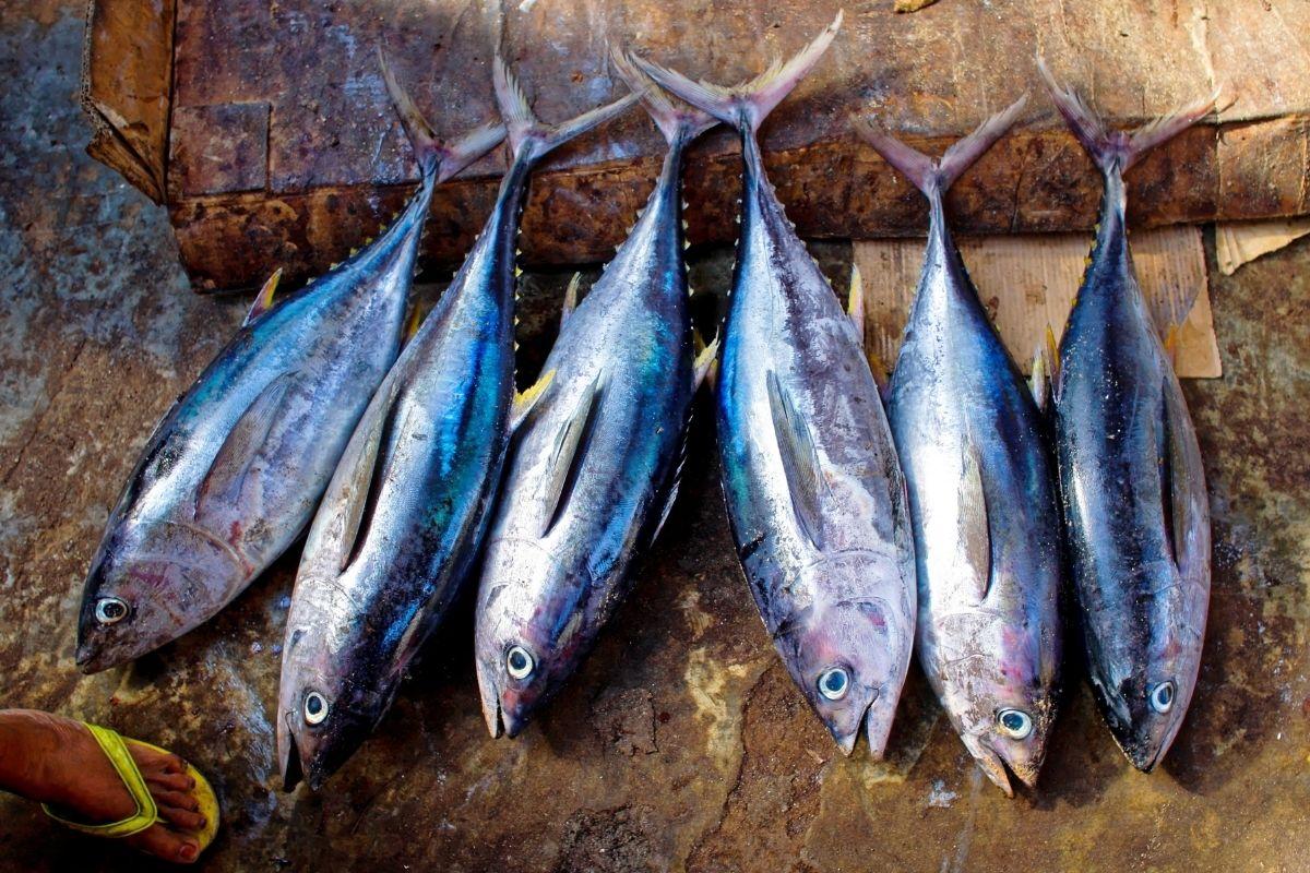 Operação transnacional combate o tráfico de espécies raras de peixes
