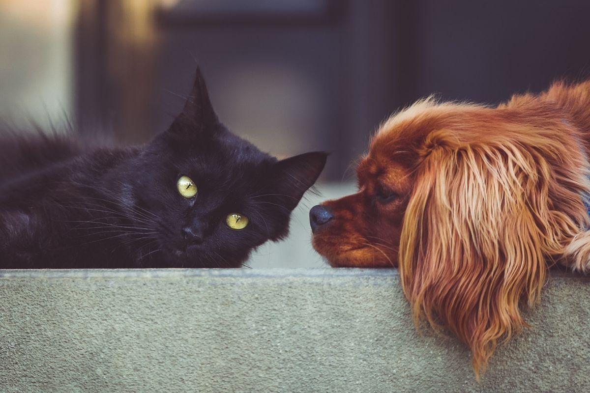 Fiocruz identifica cão e gato com anticorpos contra novo coronavírus