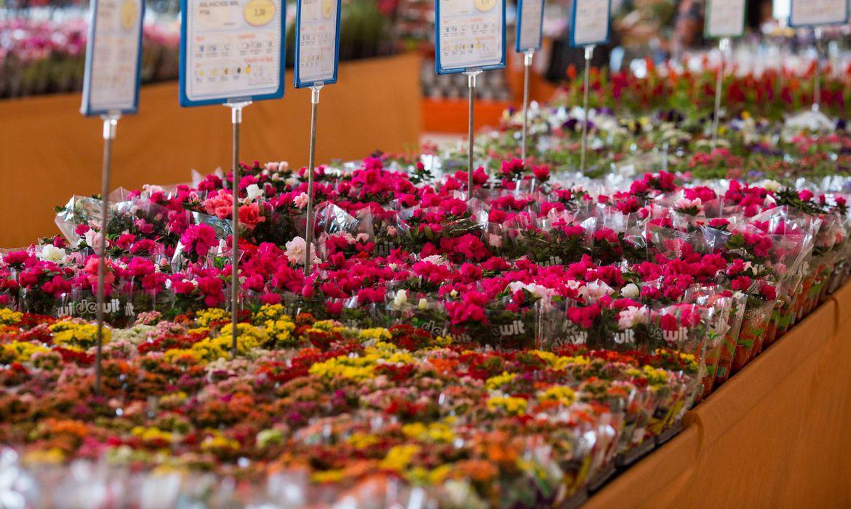 dia-das-maes:-data-e-a-mais-importante-para-o-setor-de-flores
