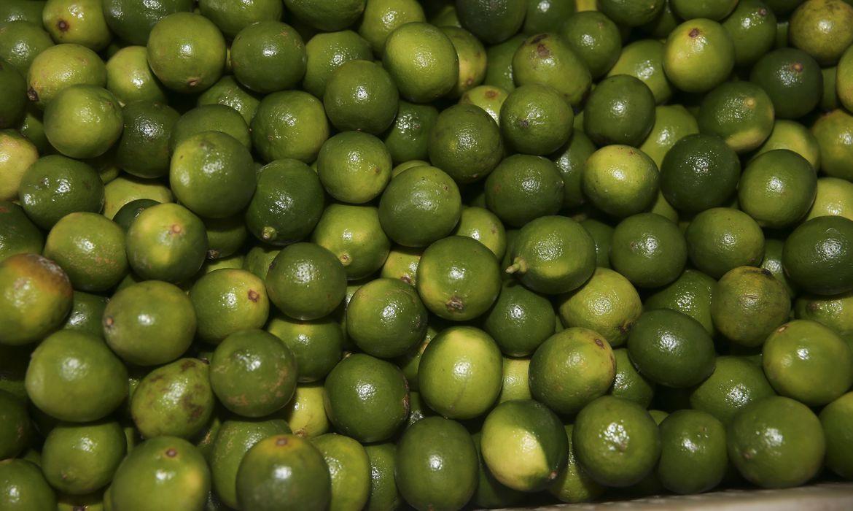 ministerio-lanca-rota-da-fruticultura-no-distrito-federal