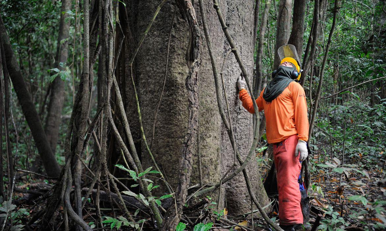 governo-estuda-concessao-de-cinco-areas-florestais-no-amazonas