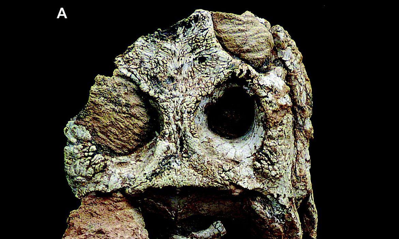 acervo-da-uerj-ganha-dois-fosseis-de-nova-especie-de-crocodiliformes