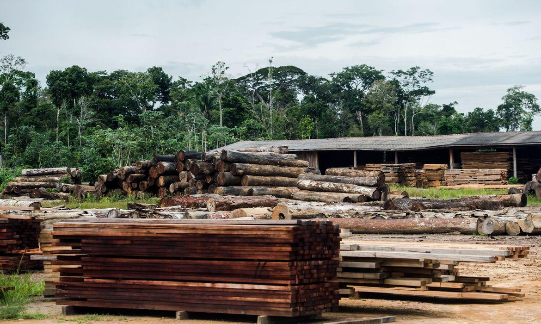 classificacao-de-madeira-pode-beneficiar-consumidor,-diz-ministerio