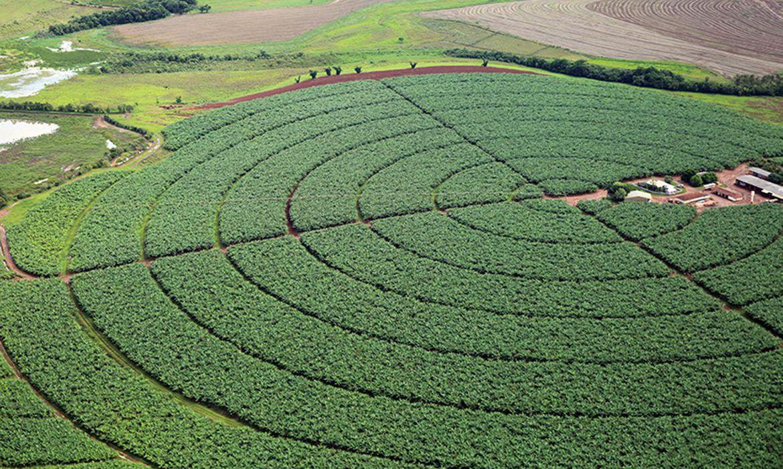 ipea-aumenta-previsao-de-alta-do-pib-do-setor-agropecuario