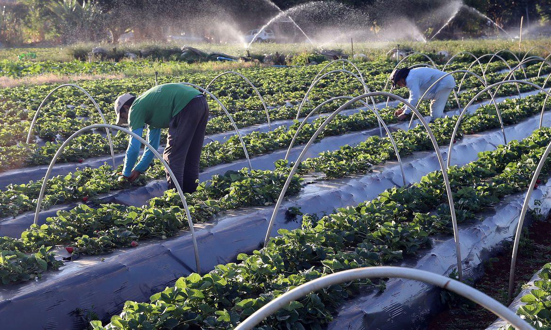 plano-safra-2021/2022:-agricultura-familiar-tera-r$-39,34-bilhoes