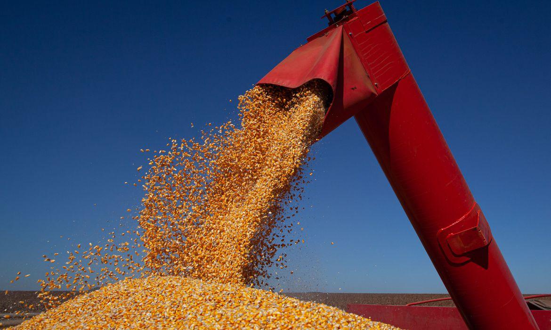 bolsonaro-diz-que-safra-brasileira-chegara-a-300-milhoes-de-toneladas