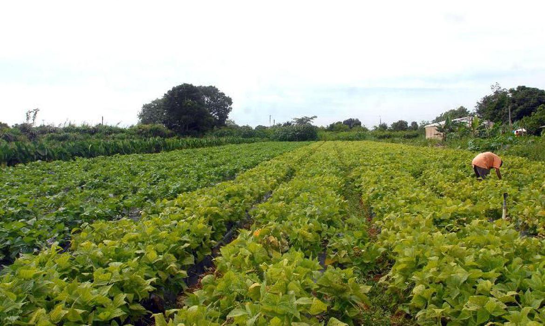 agricultores-familiares-do-amazonas-sao-incluidos-no-garantia-safra