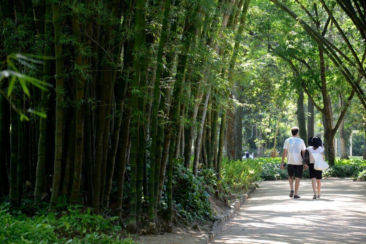 jardim-botanico-do-rio-tera-visita-noturna-a-partir-de-outubro
