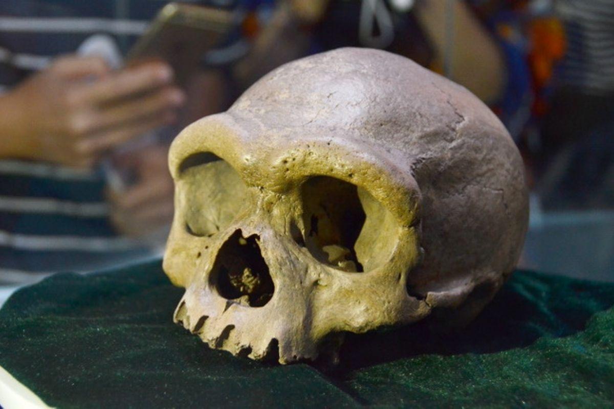 Fóssil de espécie mais próxima aoHomo sapiensé descoberto na China