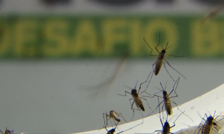 casos-de-dengue-em-sao-paulo-sao-o-triplo-de-2020