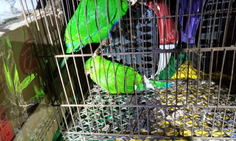 preso-no-rio-grupo-que-transportava-mais-de-100-animais-silvestres