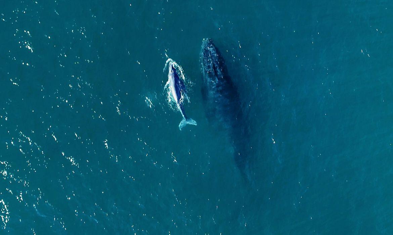 comecou-a-temporada-de-baleias-no-litoral-brasileiro