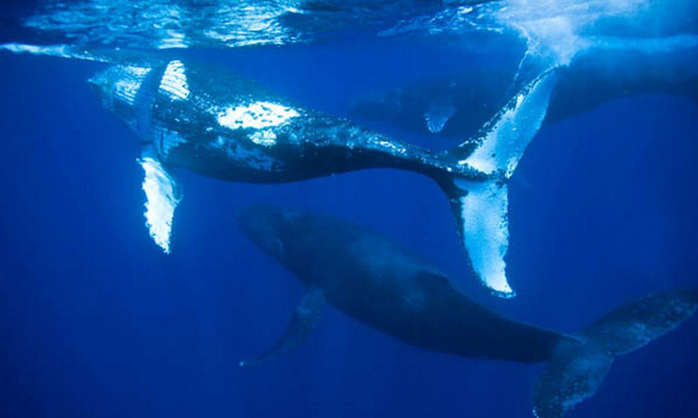 encalhe-de-baleias-jubarte-e-recorde-no-brasil-no-primeiro-semestre