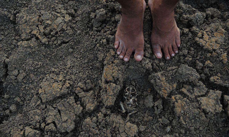 governos-estudam-acoes-para-mitigar-efeitos-da-seca-no-piaui