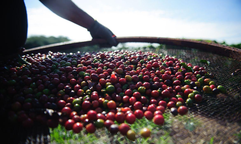 quebra-da-safra-e-exportacoes-devem-elevar-o-preco-do-cafe-em-ate-40%