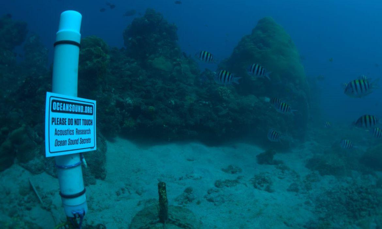 bioacustica-e-usada-para-conservarbiodiversidadeem-ilhas-oceanicas