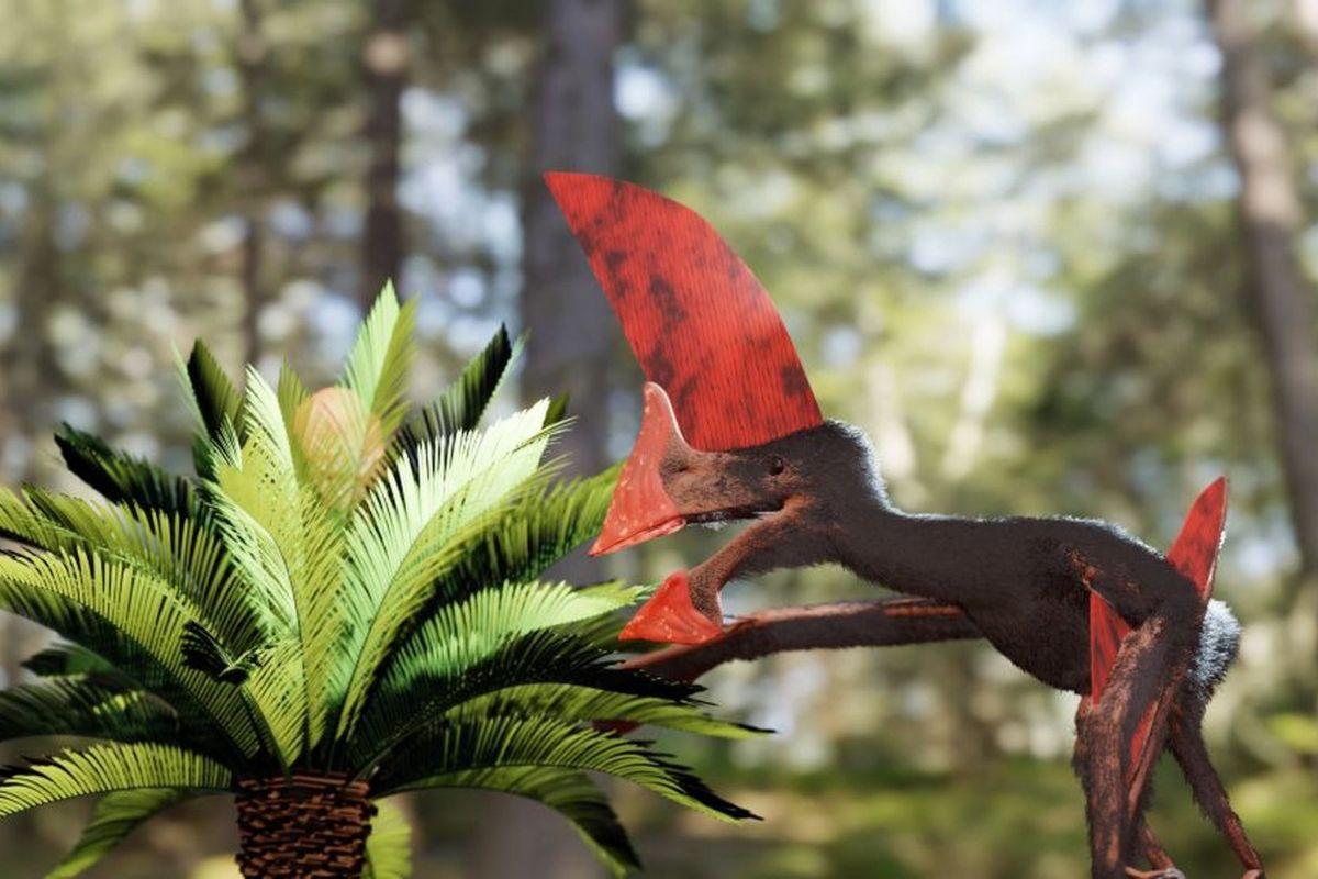 estudo-apresenta-o-mais-completo-fossil-de-tapejarideo-do-brasil