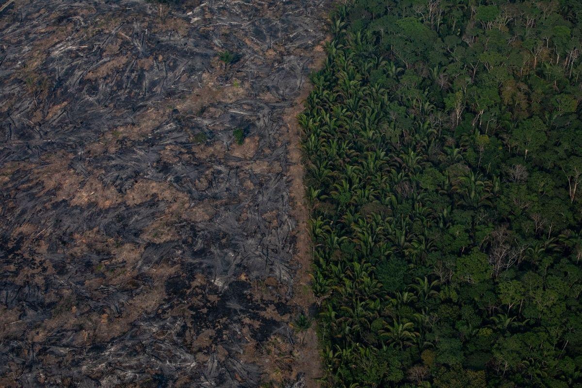 Desmatamento na Amazônia em agosto é o maior para o mês em dez anos