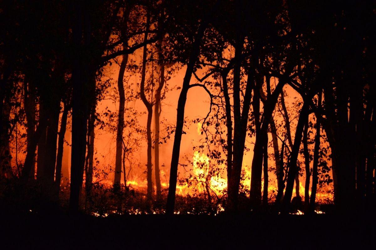 mg-bombeiros-atendem-642-chamadas-de-incendios-florestais-em-48-horas